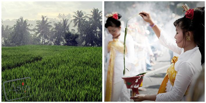 Photo story Asia Motion - 9_Sawah_Blessing.jpg