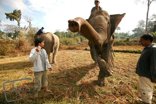 Photo story Asia Motion - CS_elephants_Laos03.JPG