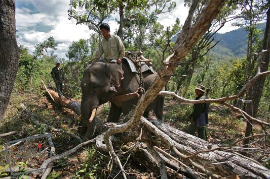 Photo story Asia Motion - CS_elephants_Laos18.JPG