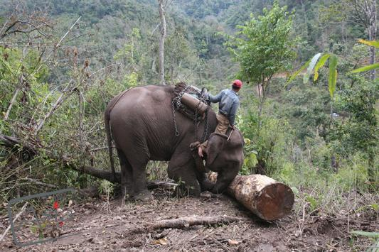 Photo story Asia Motion - CS_elephants_Laos19.JPG