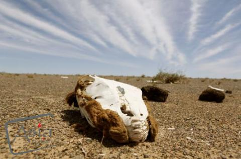 Photo storyImpressions from the Gobi desert Part 2